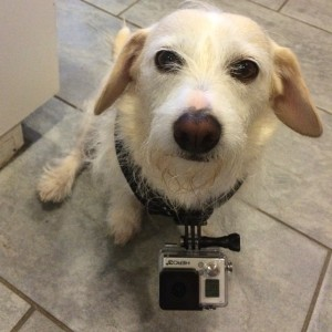 Wag Team member, Zoey, approves of the GoPro too!